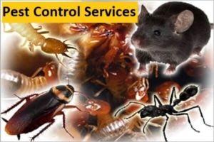 Pest control-pest exterminators-kenya-home care services