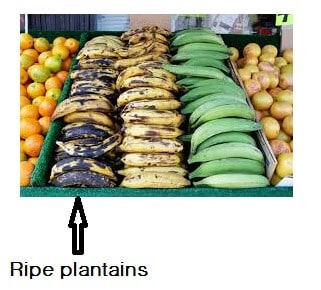 kenya plantains