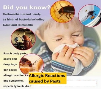 pests and diseases-asthma