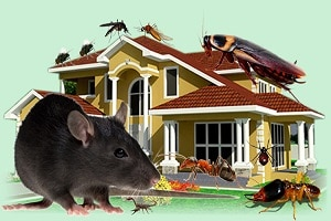 kenyan pest control services-kenya-pest exterminators-affordable