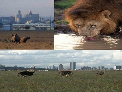Nairobi National Park-Great Places-trip-Africa