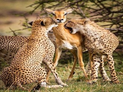 serengeti-Family vacation-Africa